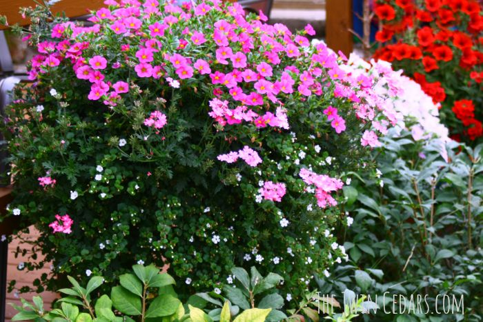 hanging plant garden ideas