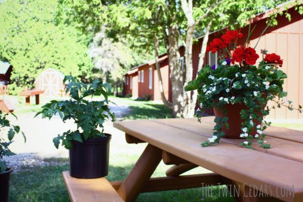 potted plants springtime garden ideas