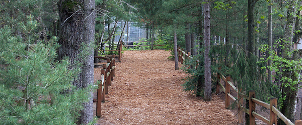 nature path via Garlyn Zoo