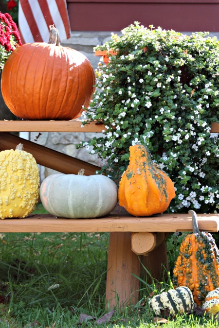 gourds-for-fall-2016
