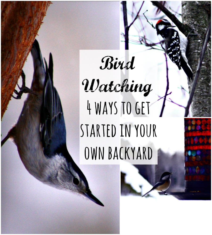 Bird Watching 4 ways to get started