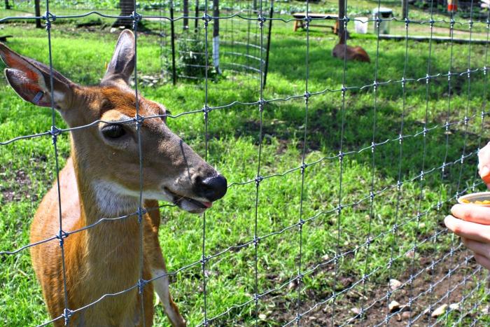 The Deer Ranch St Ignace Michigan