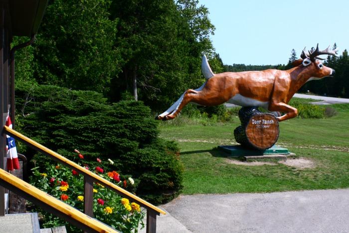 The Deer Ranch