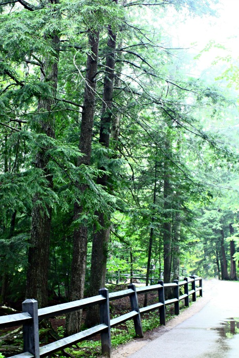 Path to Tahquamenon Falls